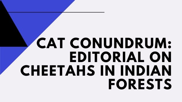 Cat conundrum: Editorial on cheetahs in Indian forests