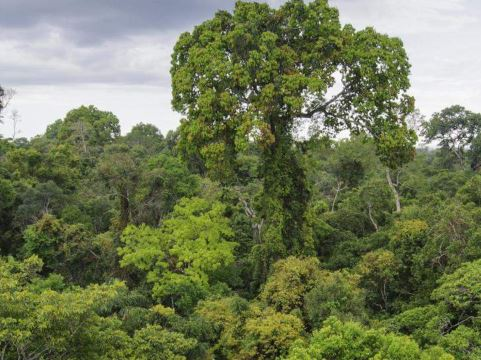 Safe forests, safe people: On diseases of animal origin